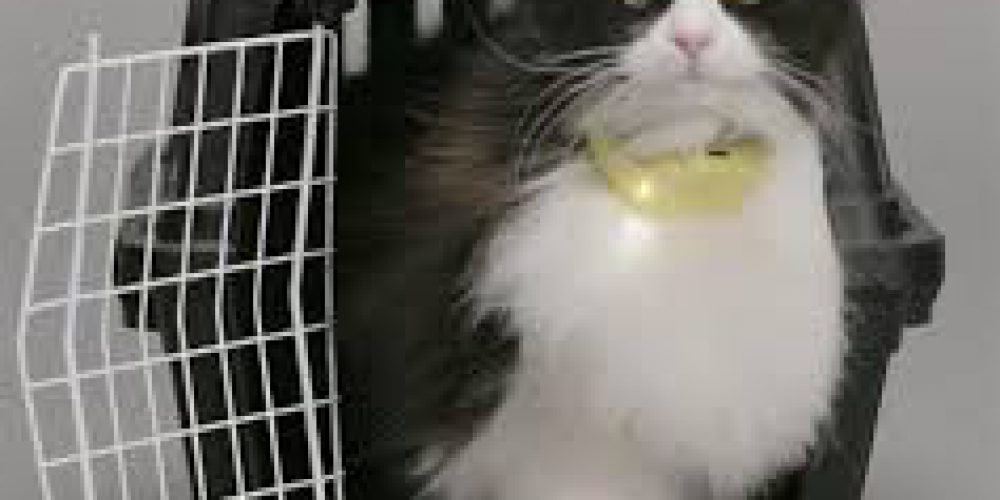 How The Catterbox Translates Cats' Meows Into Human Voices!
